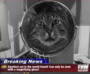 Breaking News - Smallest cat in the world found! Can only be seen with a magnifying glass!