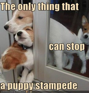 The only thing that  can stop a puppy stampede