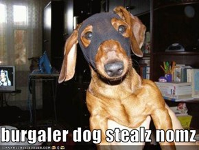 burgaler dog stealz nomz