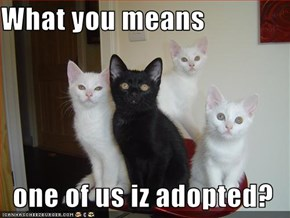 What you means  one of us iz adopted?
