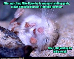 After watching Mike Rowe try to wrangle fainting goats,   Clovis decided she was a fainting hamster.