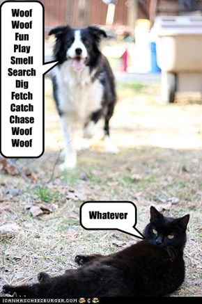 Woof Woof Fun Play Smell Search Dig Fetch Catch Chase Woof Woof