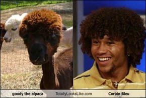 goody the alpaca Totally Looks Like Corbin Bleu