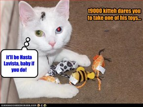 t9000 kitteh dares you to take one of his toys...