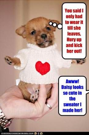 Awww! Daisy looks so cute in the sweater I made her!