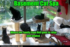 Basement Cat Spa