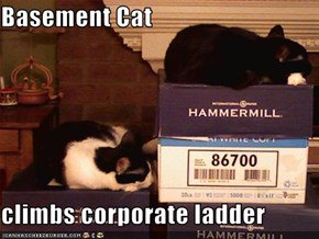 Basement Cat  climbs corporate ladder
