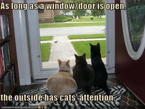 As long as a window/door is open,  the outside has cats' attention.