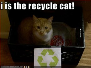 i is the recycle cat!