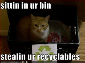 sittin in ur bin  stealin ur recyclables