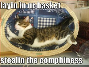 layin in ur basket  stealin the comphiness