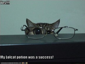 Yes!!!  My Lolcat potion was a success!