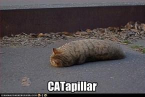 CATapillar