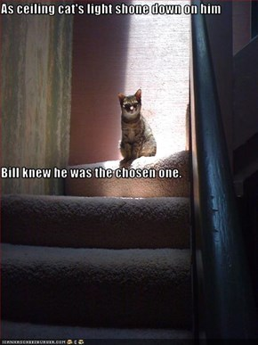 As ceiling cat's light shone down on him Bill knew he was the chosen one.