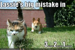Lassie's big mistake in  3....2....1.....