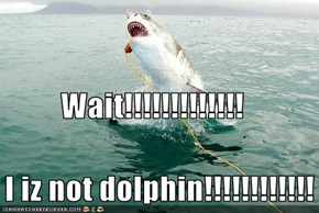 Wait!!!!!!!!!!!!!    I iz not dolphin!!!!!!!!!!!!