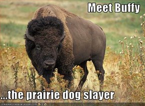 Meet Buffy  ...the prairie dog slayer