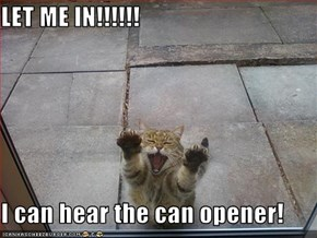 LET ME IN!!!!!!  I can hear the can opener!