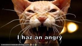 I haz an angry