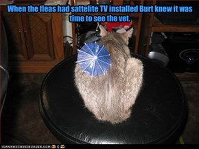 When the fleas had sattelite TV installed Burt knew it was time to see the vet.