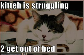 kitteh is struggling   2 get out of bed