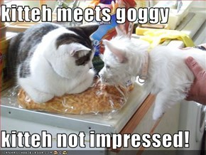 kitteh meets goggy  kitteh not impressed!