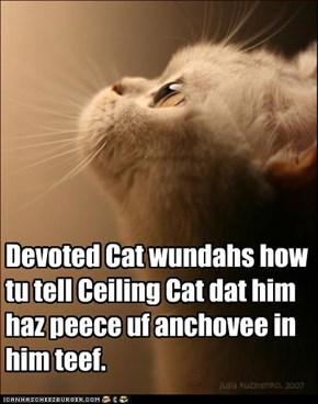 Devoted Cat wundahs how tu tell Ceiling Cat dat him haz peece uf anchovee in him teef.