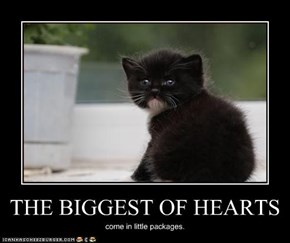 THE BIGGEST OF HEARTS