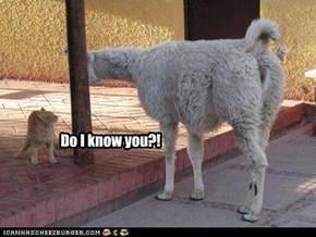 Do I know you?!