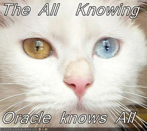 The All  Knowing   Oracle knows All