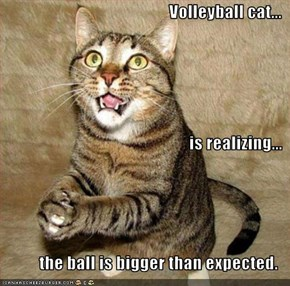Volleyball cat... is realizing... the ball is bigger than expected.