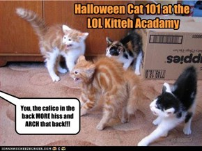 Halloween Cat 101 at the  LOL Kitteh Acadamy
