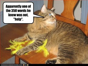 """Apparently one of the 350 words he knew was not, """"help""""."""