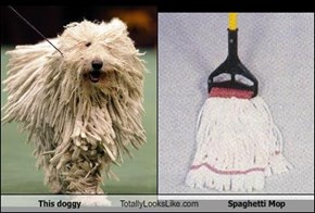This doggy Totally Looks Like Spaghetti Mop