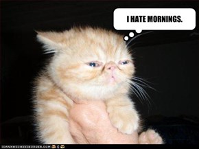 I HATE MORNINGS.