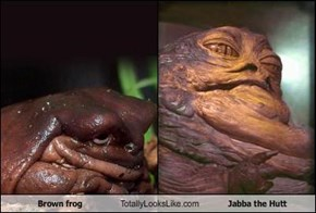 Brown frog Totally Looks Like Jabba the Hutt