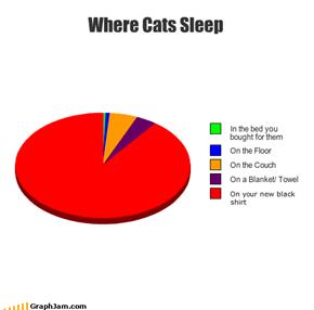 Where Cats Sleep