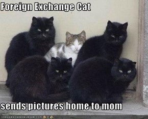 Foreign Exchange Cat  sends pictures home to mom