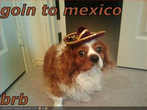 goin to mexico   brb