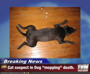 "Breaking News - Cat suspect in Dog ""mopping"" death."