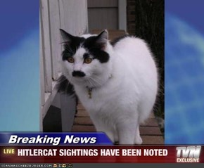 Breaking News - HITLERCAT SIGHTINGS HAVE BEEN NOTED