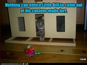Nothing can entice Little Biff to come out of his custom-made fort.