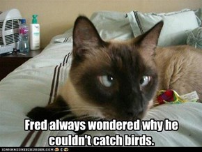 Fred always wondered why he couldn't catch birds.