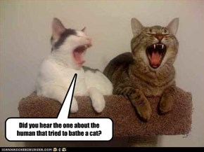 Did you hear the one about the human that tried to bathe a cat?