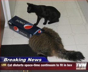 Breaking News - Cat distorts space-time continuum to fit in box