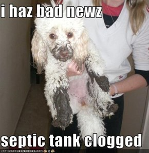 i haz bad newz  septic tank clogged