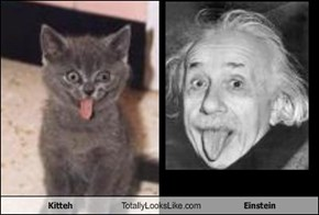 Kitteh Totally Looks Like Einstein