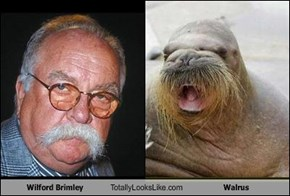 Wilford Brimley Totally Looks Like Walrus