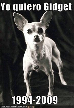Yo quiero Gidget  1994-2009