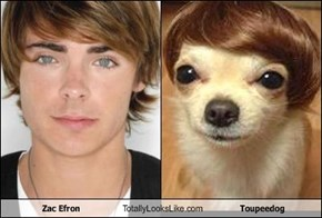 Zac Efron Totally Looks Like Toupeedog